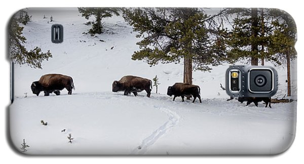 Galaxy S5 Case featuring the photograph Buffaloes In Yellowstone National Park by Carol M Highsmith