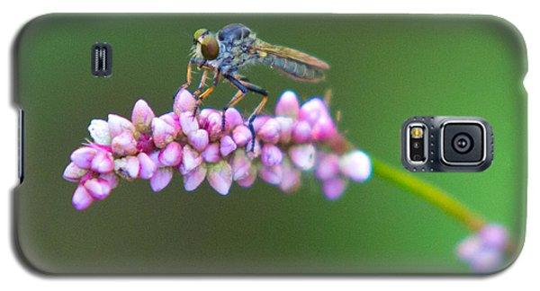 Bug Eyed Galaxy S5 Case