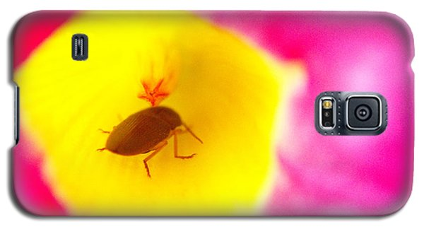 Galaxy S5 Case featuring the photograph Bug In Pink And Yellow Flower  by Ben and Raisa Gertsberg
