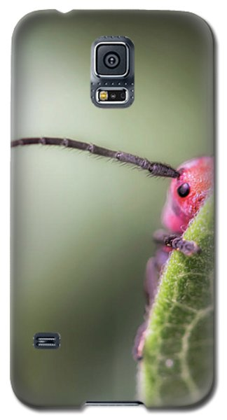 Bug Untitled Galaxy S5 Case