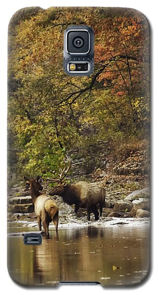 Bull And Cow Elk In Buffalo River Crossing Galaxy S5 Case