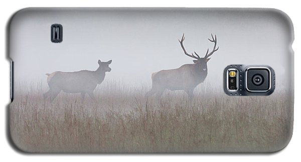 Bull And Cow Elk In Fog - September 30 2016 Galaxy S5 Case