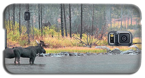 Bull And Cow Moose In East Rosebud Lake Montana Galaxy S5 Case