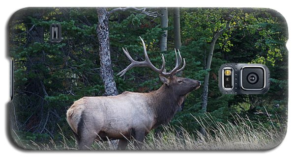 Galaxy S5 Case featuring the photograph Bull Elk 2 by Aaron Spong