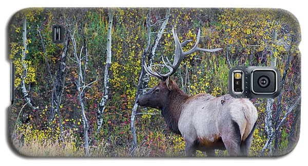 Galaxy S5 Case featuring the photograph Bull Elk by Aaron Spong
