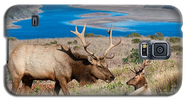 Bull Elk Above Tomales Bay Galaxy S5 Case