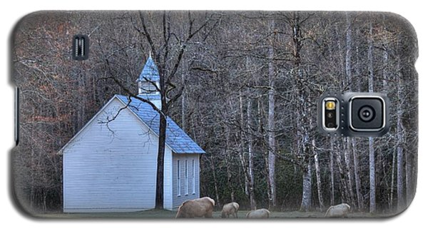 Bull Elk Attending Palmer Chapel  In The Great Smoky Mountains National Park Galaxy S5 Case