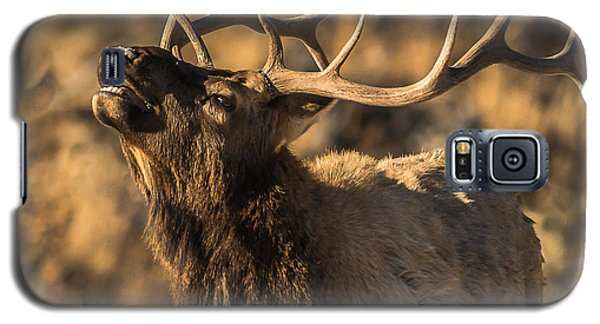 Bull Elk Bugle In Fall Galaxy S5 Case by Yeates Photography