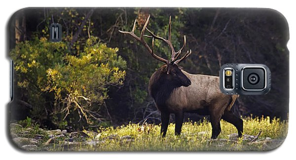 Bull Elk Checking For Competition Galaxy S5 Case
