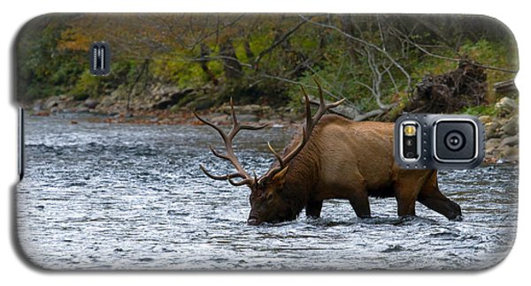 Bull Elk Crossing The River Galaxy S5 Case