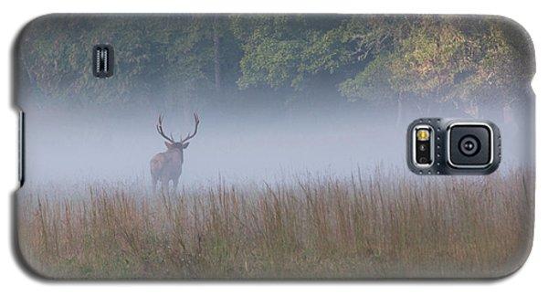 Bull Elk Disappearing In Fog - September 30 2016 Galaxy S5 Case