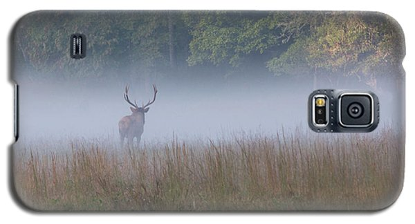 Bull Elk Disappearing In Fog - September 30 2016 Galaxy S5 Case