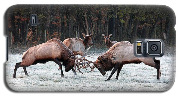 Bull Elk Fighting In Boxley Valley Galaxy S5 Case