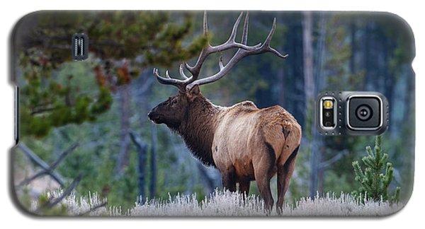 Bull Elk In Forest Galaxy S5 Case