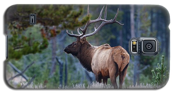 Bull Elk In Forest Galaxy S5 Case