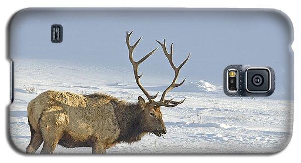 Bull Elk In Snow Galaxy S5 Case