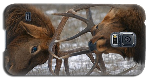 Bull Elk In The Rut-signed Galaxy S5 Case