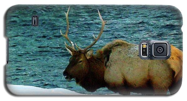 Bull Elk In Winter Galaxy S5 Case