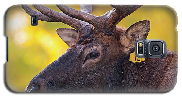 Bull Elk Number 10 Galaxy S5 Case