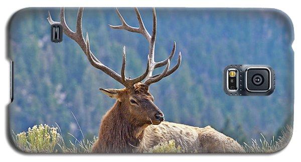 Bull Elk Resting Galaxy S5 Case