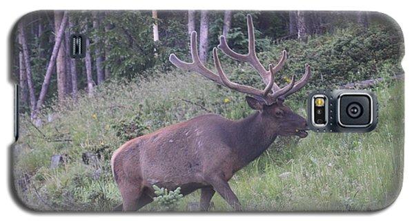 Bull Elk Rocky Mountain Np Co Galaxy S5 Case