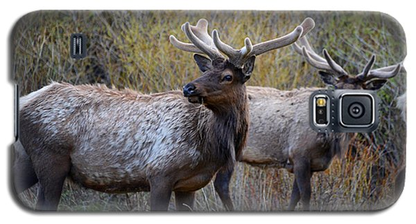 Bull Elk Rocky Mountain National Park Galaxy S5 Case