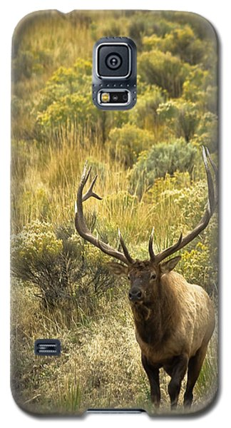 Galaxy S5 Case featuring the photograph Bull Elk by Roger Mullenhour