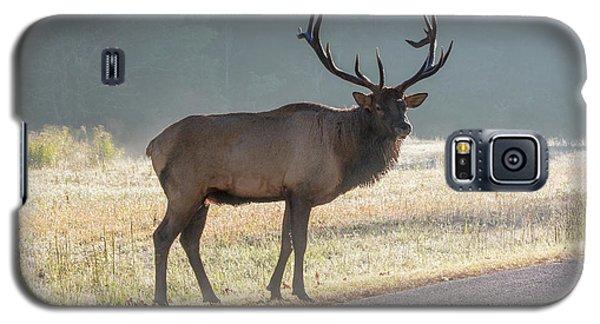 Bull Elk Watching Galaxy S5 Case