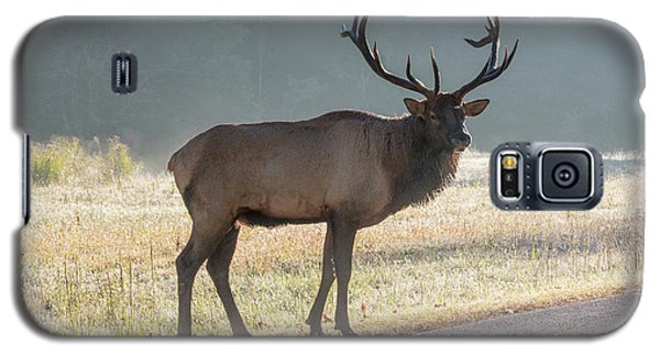 Bull Elk Watching Galaxy S5 Case