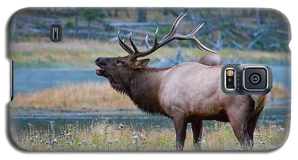 Bull Elk Galaxy S5 Case