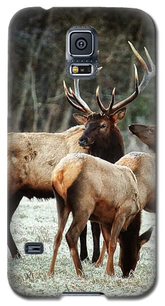 Bull Elk With Cows In The Late Rut Galaxy S5 Case