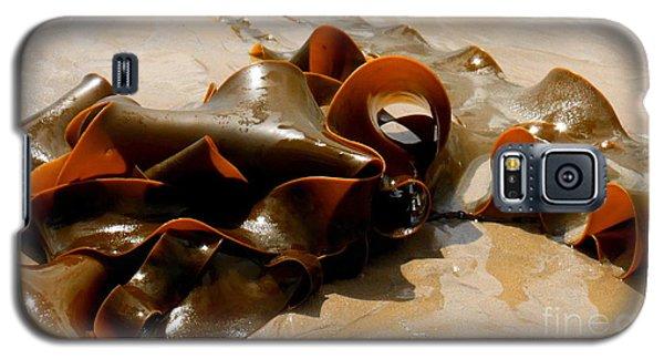 Bull Kelp Galaxy S5 Case