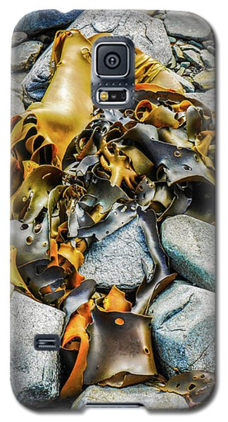 Bull Kelp On Blue Rocks Galaxy S5 Case by Lexa Harpell