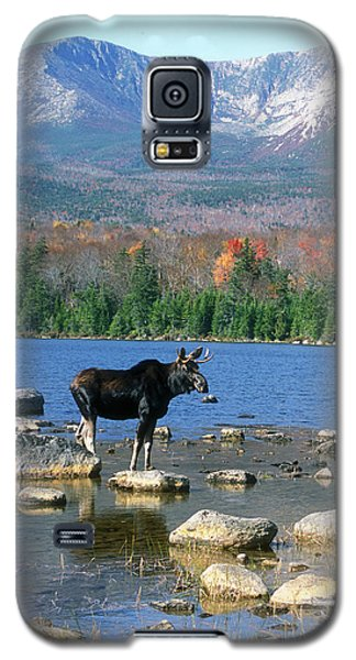 Bull Moose Below Mount Katahdin Galaxy S5 Case