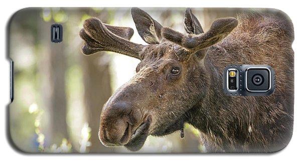 Bull Moose Galaxy S5 Case