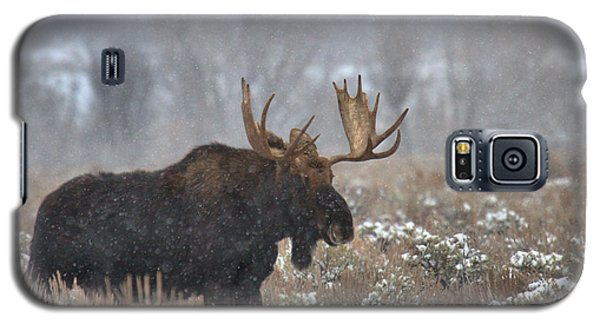 Galaxy S5 Case featuring the photograph Bull Moose In The Fog by Adam Jewell