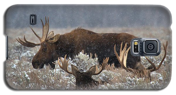 Galaxy S5 Case featuring the photograph Bull Moose In The Snowy Meadow by Adam Jewell