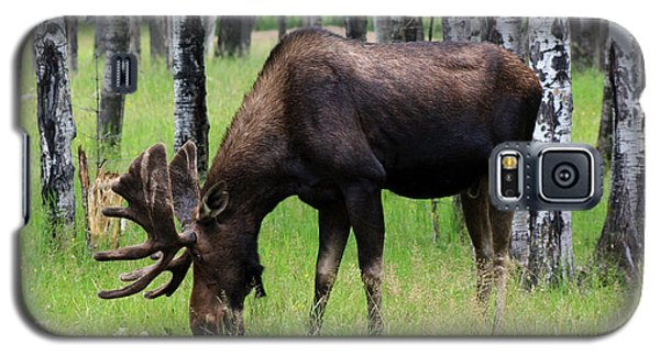 Bull Moose In The Woods  Galaxy S5 Case