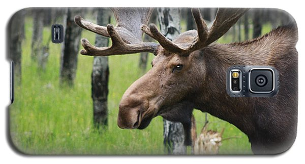 Bull Moose Portrait Galaxy S5 Case