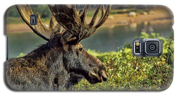 Bull Moose Galaxy S5 Case by Steven Parker