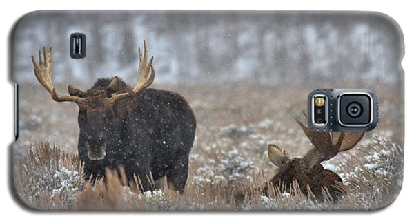 Galaxy S5 Case featuring the photograph Bull Moose Winter Wandering by Adam Jewell
