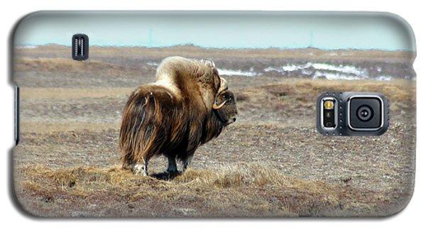 Bull Musk Ox Galaxy S5 Case