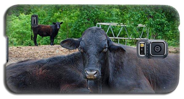 Bull Relaxing Galaxy S5 Case
