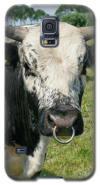 Galaxy S5 Case featuring the photograph Bull With Snout Ring by Patricia Hofmeester