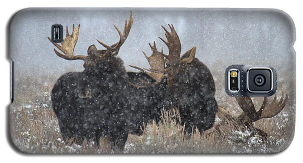 Galaxy S5 Case featuring the photograph Bulls In The Snow by Adam Jewell
