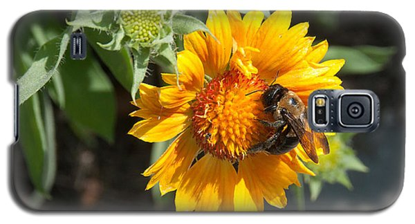 Bumble Bee Collecting Pollen On Sunflower Galaxy S5 Case