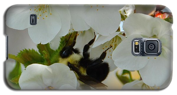 Bumble Bee In Hiding Galaxy S5 Case