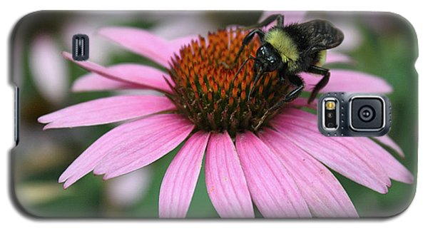 Bumble Bee On Pink Coneflower Galaxy S5 Case