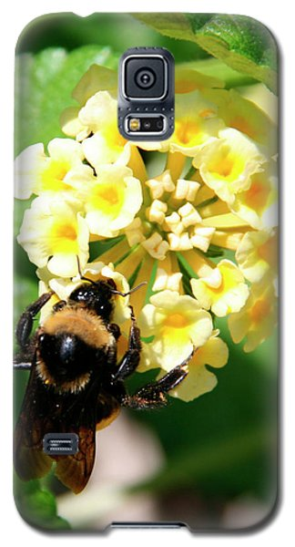 Bumble Bee On Yellow Flowers Galaxy S5 Case by George Jones