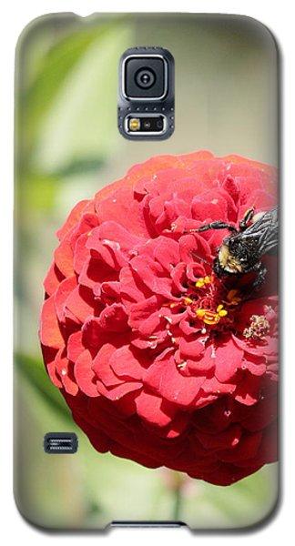 Bumble Bee On Zinnia Galaxy S5 Case